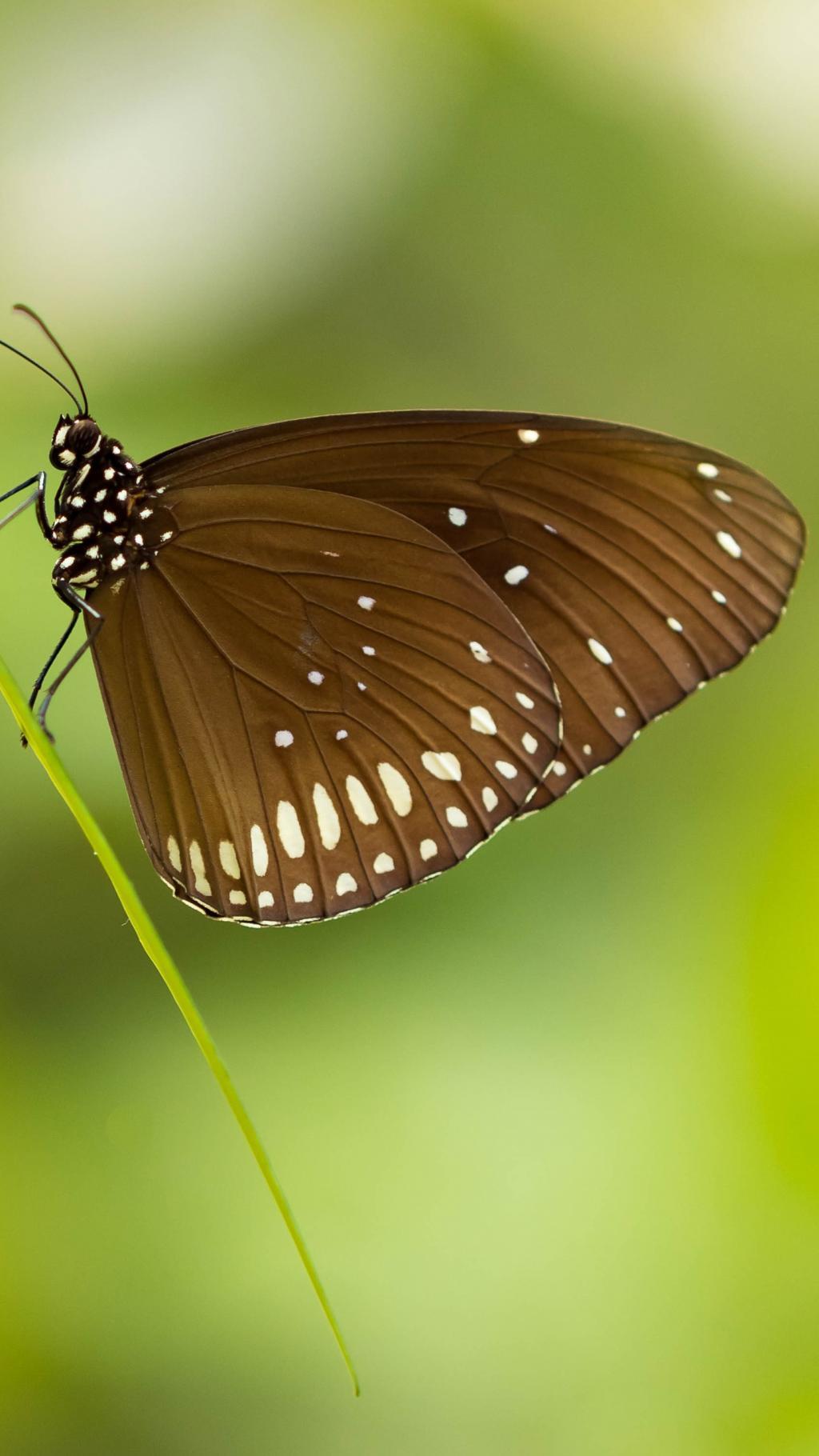 蝴蝶入梦 如过清风