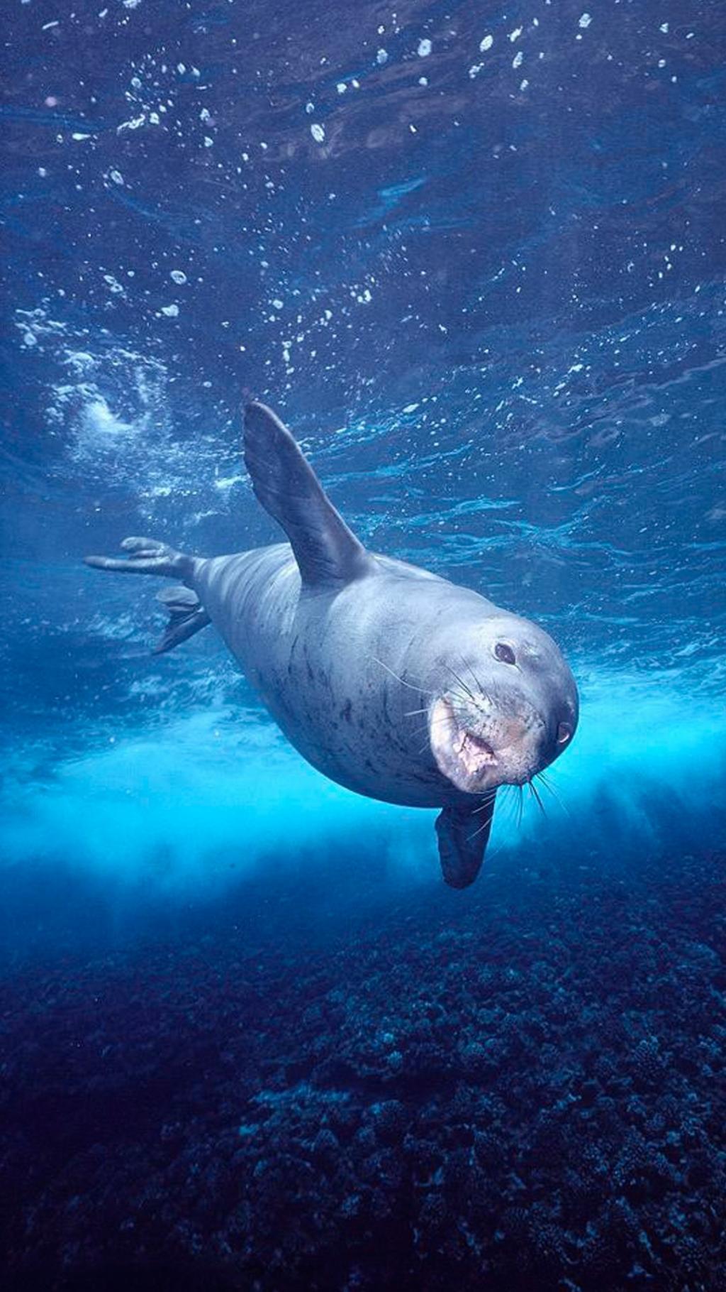 深海里的海豹