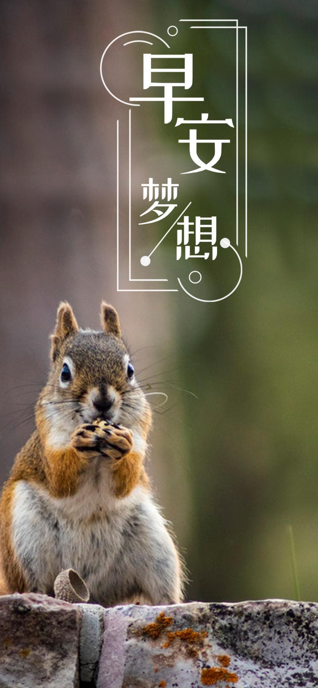 早安梦想/可爱的小松鼠
